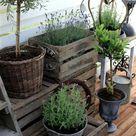 Balkonbepflanzung - pflegeleichte Balkonpflanzen
