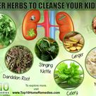 Top 10 Super Herbs to Cleanse Your Kidneys | Top 10 Home Remedies