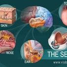 Humans have a lot more than five senses — here are 18 | Considerable