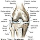 Knee Joint Anatomy & Motion - Knee Pain Explained