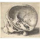 10 inch Photo. Sectioned skull in profile to left with the left