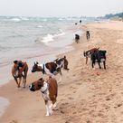 Kruse Dog Beach Off Leash Area Dog Goes Dog Beach Cute Dogs