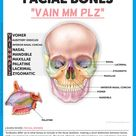 Others also include bones that can be seen in the frontal aspect of the skull such as the frontal bo
