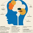 Here's How the Brain Makes Memories—and What You Can Do to Keep Your Mind Sharp