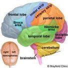 Mayfield Brain & Spine