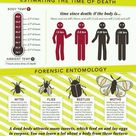 Crime scene science - Part 2 #CSI #crime #scene #time #death #entomology #insect #forensic #science