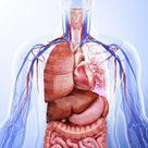 What Are the Various Organ Systems Contained Within the Human Body?