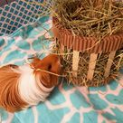Hay Feeder, Winnie's Hay Feeder Station, Guinea Pig Hay Stand Large