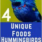 4 Unique Foods Hummingbirds Eat