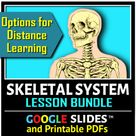 Skeletal System BUNDLE {Editable and Options for Differentiation}