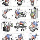Training nach Muskelgruppe - effektive Fitnessübungen für jeden Muskel
