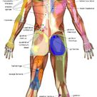 Therapeutic Massage & Acupuncture provide muscle pain relief