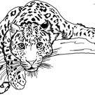 Jaguar Coloring Pages For Adults