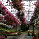 Wholesale Plants