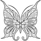 Adult Butterfly Coloring Book