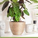 Bathroom plants  that absorb moisture excess