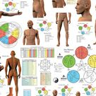 Five Elements of Acupuncture Poster 24