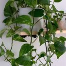 Pothos Care 101 : Is this the easiest houseplant to care for? | Kanso Designs | Modern Planter ...