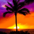 Hawaiian Sunset