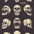Anatomic Skulls   Vector Pack