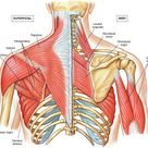 What Are The Most Beneficial Back Exercises Here's 8 Strengthening Movements   GymGuider.com