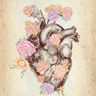 Herz mit Blumen – Medizinische Anatomie Bilder