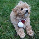 PDF Knitting PATTERN - Christmas Candy Cane Dog Scarf /PomPom Neckwarmer//Santa Claus Pet Accessories/ Chunky Stripe Cowl/ Elf Cat Clothing