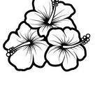Hummingbird And Hibiscus Drawing Bing Images Sketch Coloring Page
