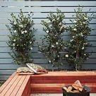 29 Courtyard garden ideas - paving, plants, outdoor entertaining