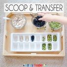 Scoop and Transfer   Busy Toddler