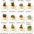 Sukkulentenarten Die 10 schönsten & winterharten   Plantura
