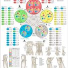Five Elements Acupuncture Poster 24