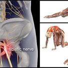 How To Workout With Sciatica Using These 8 Relaxing Poses That Offer Relief - GymGuider.com