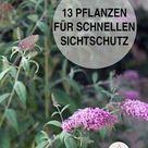 Schnell wachsende Pflanzen für einen Sichtschutz