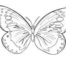Butterfly coloring page | Free Printable Coloring Pages