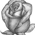 How To Draw A Rose Bud, Rose Bud, Step by Step, Drawing Guide, by Dawn
