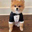 Black wedding dog tuxedo Pomeranian suit Black dog suit Luxury dog outfit Custom dog suit Birthday dog costume Dog wedding attire
