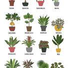 Tropical flowers in pot. Houseplants