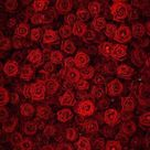 Flowers Background Red Backdrop S-3171