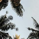 Let's go Coconuts! Enjoy 10 Tropical iPhone Wallpapers!