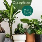 Pflegeleichte Zimmerpflanzen: Unsere Top 10 - Plantura