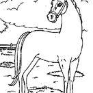 Kids-n-Fun | Kleurplaat Paarden Paard