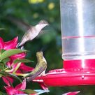 Hummingbird Food Recipes