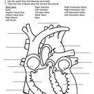 parts of the heart to label