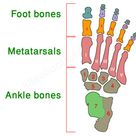 Human Skeleton for Kids   Skeletal System   Human Body Facts