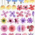 Wild Watercolor DIY (2171)   Illustrations   Design Bundles