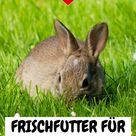 Frischfutter für Kaninchen