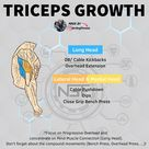 The Most Effective Mass Building Triceps Workout