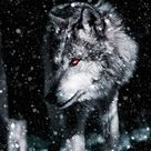 Alpha Wolf IPhone Wallpaper - IPhone Wallpapers
