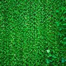 Green Leaves Wall Photo Booth backdrop UK G-592 - 6.5'W*6.5'H*(2*2m)